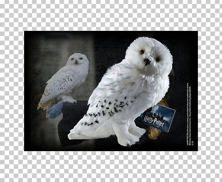 Hedwig Rubeus Hagrid Crookshanks Fictional Universe Of Harry Potter Hermione Granger PNG, Clipart, Beak, Bird, Bird Of Prey, Collectable, Crookshanks Free PNG Download