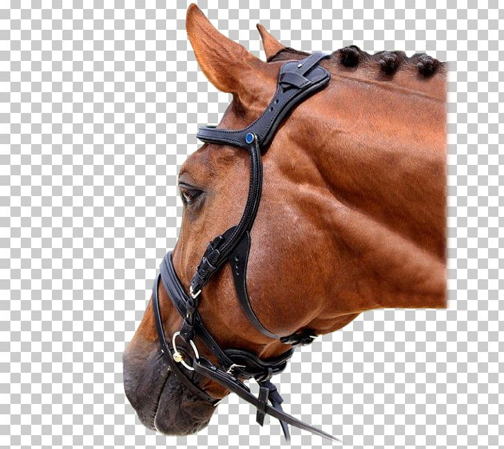 Horse Tack Bitless Bridle Bitless Bridle Png Clipart Animals