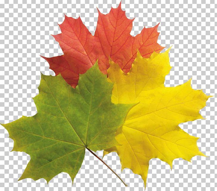 Autumn Leaf Color PNG, Clipart, Autumn, Autumn Leaf Color, Autumn Leaves, Bestoftheday, Bodyshope Free PNG Download