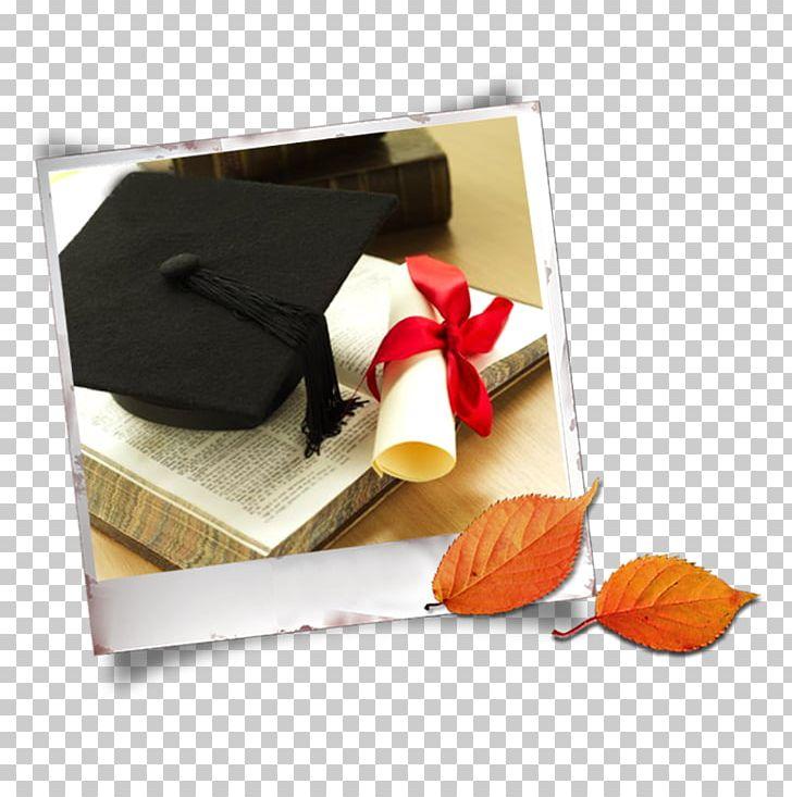 Graduation Ceremony Estudante PNG, Clipart, Alumnus, Bachelor Vector, Christmas Decoration, Class, Deciduous Free PNG Download