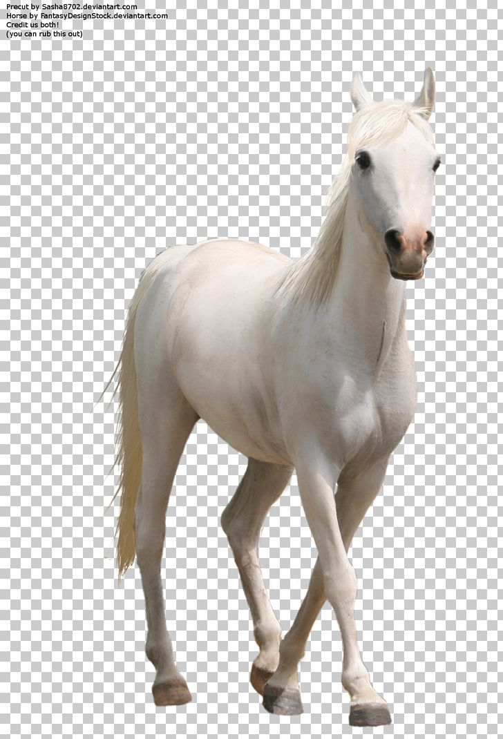 Whitehorse PNG, Clipart, Animals, Colt, Computer Icons, Cubiro, Dolphin Free PNG Download