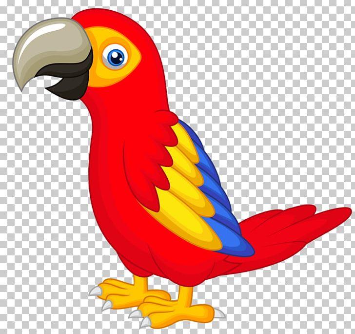 Parrot Talking Bird PNG, Clipart, Animals, Beak, Bird ...