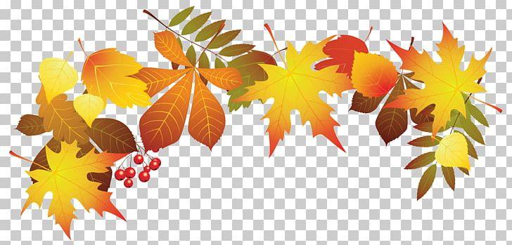 Autumn Leaf Color PNG, Clipart, Autumn, Autumn Leaf Color, Autumn Leaves, Blog, Color Free PNG Download