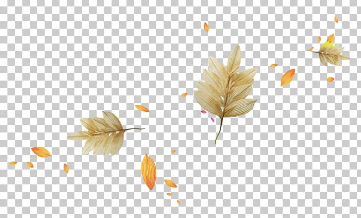 Autumn Leaves Light Leaf PNG, Clipart, Autumn, Autumn Leaves, Autumn Tree, Color, Computer Wallpaper Free PNG Download