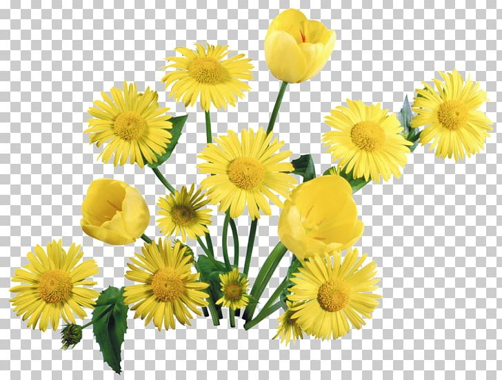 Tulip Flower Bouquet Desktop 1080p PNG, Clipart, 1080p, Annual Plant, Calendula, Chamaemelum Nobile, Chrysanths Free PNG Download