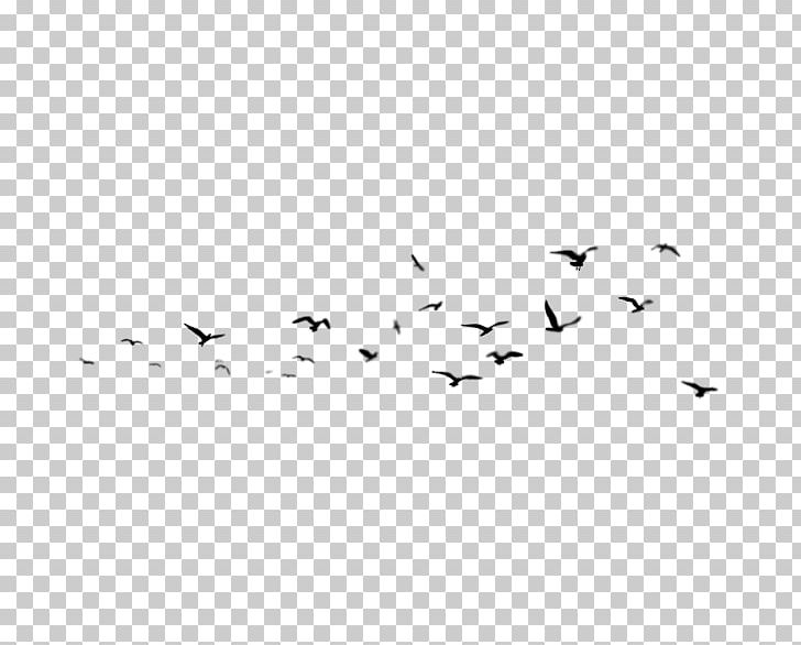 Liuyang Oil Painting Wall PNG, Clipart, Angle, Animals, Area, Art, Bird Free PNG Download