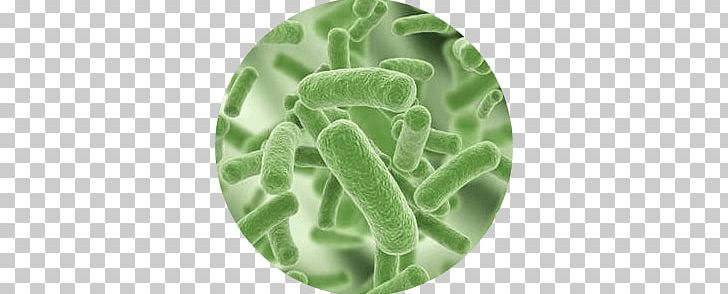 Bacteria PNG, Clipart, Bacteria Free PNG Download