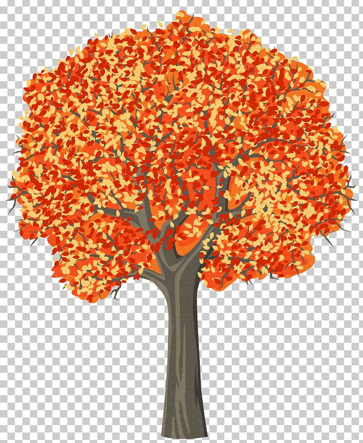 Trees For Kids Pine Png Clipart Art Autumn Color Tree Conifers Drawing Free Png Download