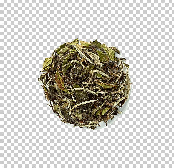 Hōjicha Nilgiri Tea Bancha Sencha PNG, Clipart, Assam Tea, Audi Q7, Baihao Yinzhen, Bai Mudan, Bancha Free PNG Download