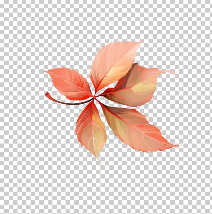 Petal Leaf PNG, Clipart, Flower, For You, Leaf, Petal, Plant Free PNG Download