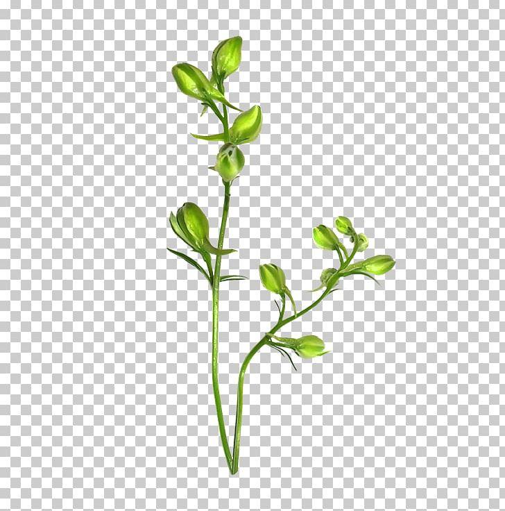 Branch Plant Stem Leaf Flower Sepal PNG, Clipart, Branch, Branch Plant, Daum, Flower, Flowerpot Free PNG Download