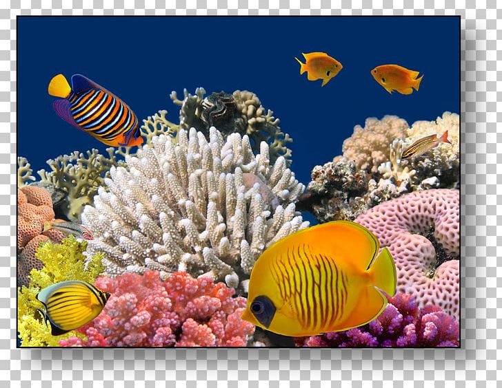 Red Sea Bligh Water Coral Reef Underwater PNG, Clipart, Alcyonacea, Anemone, Bligh Water, Computer Wallpaper, Coral Free PNG Download