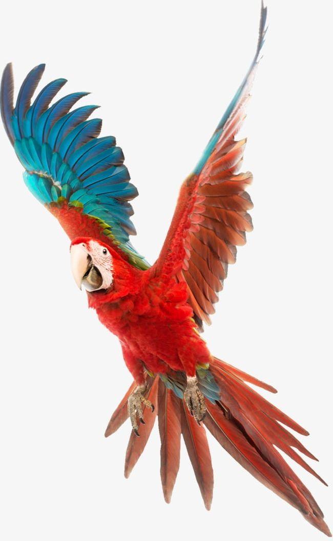 Parrot PNG, Clipart, Asuka, Bird, Parrot, Parrot Clipart Free PNG Download