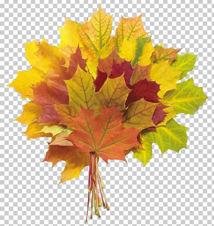 Autumn Leaf Color Flower Bouquet PNG, Clipart, Autumn, Autumn Leaf Color, Autumn Leaves, Clipart, Fall Free PNG Download