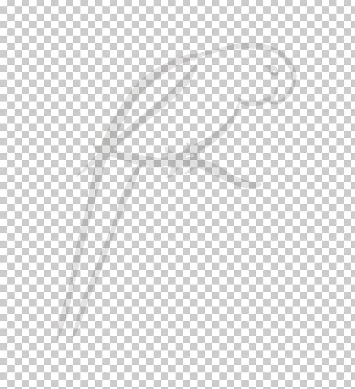 Feather Drawing White PNG, Clipart, Angle, Beak, Bird, Black And White, Branch Free PNG Download