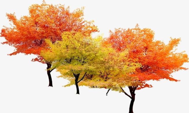 Autumn Tree PNG, Clipart, Autumn Clipart, Fall, Tree Clipart, Trees Free PNG Download