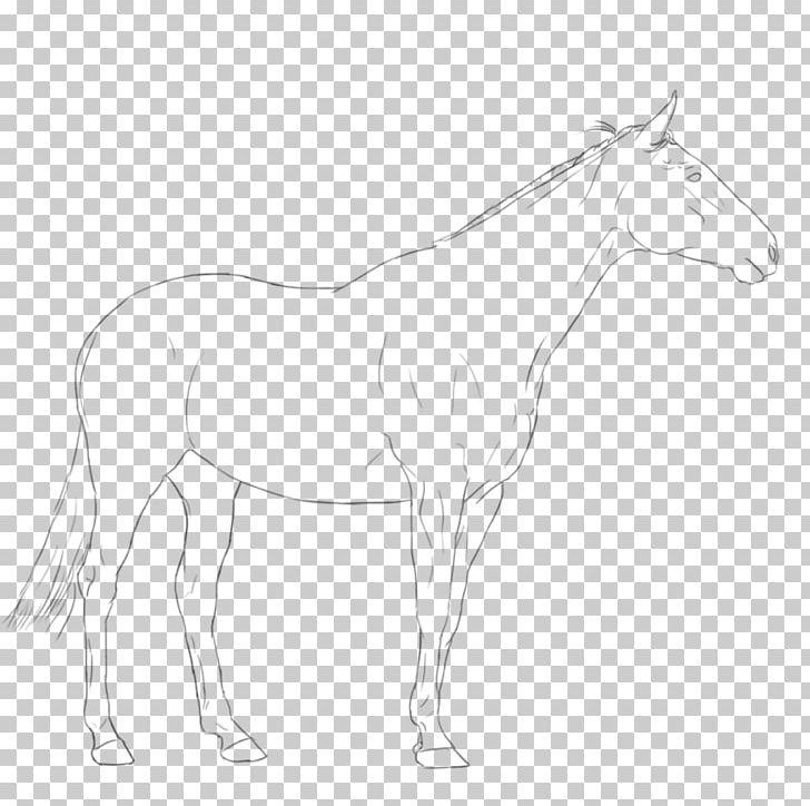 Mule Foal Stallion Bridle Colt PNG, Clipart, Arm, Artwork, Black And White, Bridle, Colt Free PNG Download