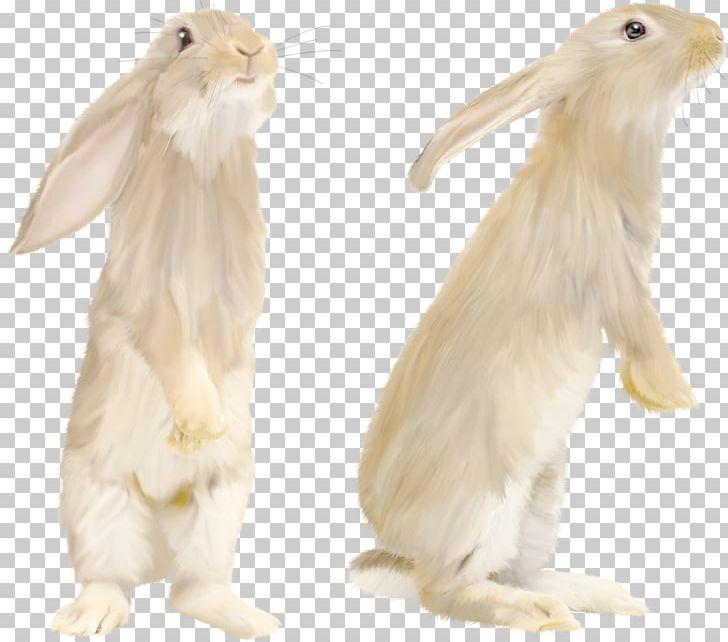 Rabbit PNG, Clipart, Rabbit Free PNG Download