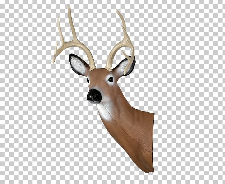 White-tailed Deer Shooting Target Target Archery Arrow PNG, Clipart, Animals, Antler, Archery, Arrow, Bow And Arrow Free PNG Download