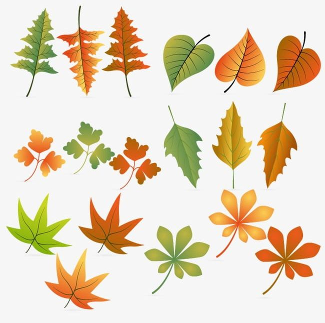 Hand-painted All Kinds Of Leaves PNG, Clipart, Akiba, Autumn