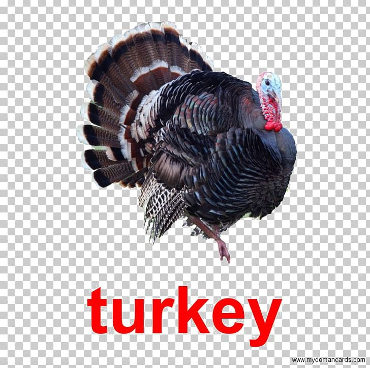 Black Turkey Turkey Meat Poultry Red Junglefowl PNG, Clipart