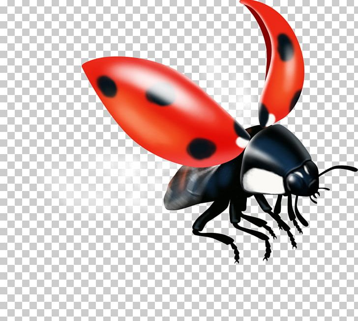 Weevil Insect Pest Lady Bird PNG, Clipart, Animals, Arthropod