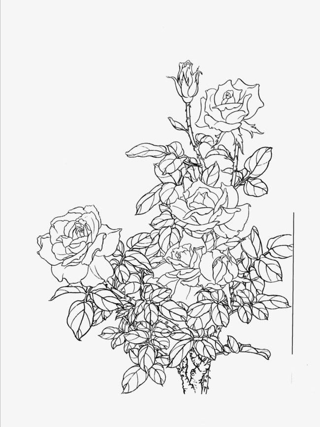 Flowers Line Drawing Artwork PNG, Clipart, Artwork, Artwork Clipart, Chinese, Chinese Style, Drawing Free PNG Download