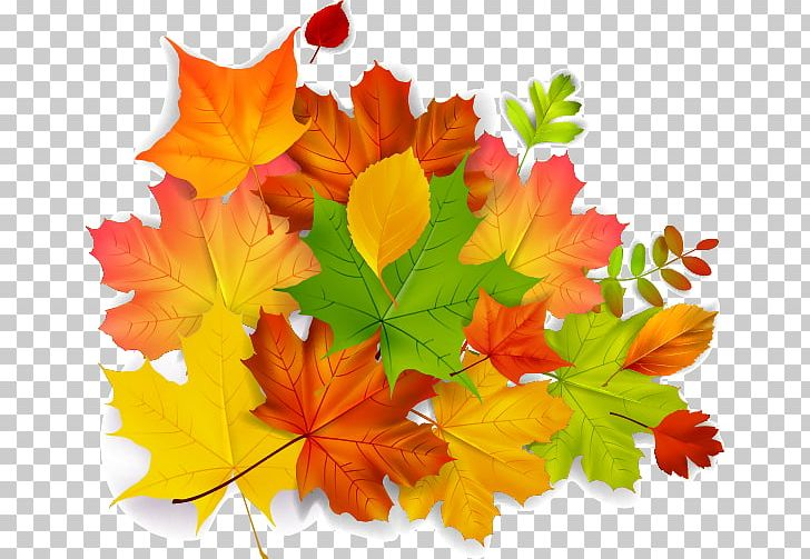 Maple Leaf Autumn PNG, Clipart, Autumn, Autumn Leaf Color, Autumn Leaves, Autumn Tree, Autumn Vector Free PNG Download
