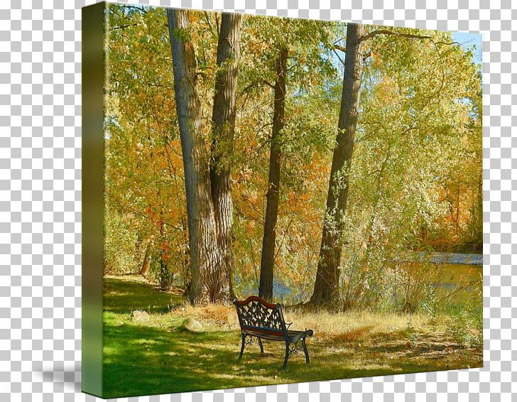 Temperate Broadleaf And Mixed Forest Painting Gallery Wrap Fauna Landscape PNG, Clipart, Art, Autumn, Biome, Canvas, Deciduous Free PNG Download