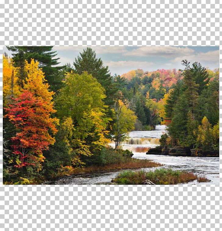 River Tree Painting Water Resources Temperate Broadleaf And Mixed Forest PNG, Clipart, Autumn, Bank, Bank M, Bayou, Broadleaved Tree Free PNG Download