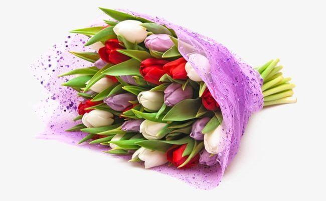 Tulip PNG, Clipart, Backgrounds, Blossom, Bouquet, Celebration, Decoration Free PNG Download