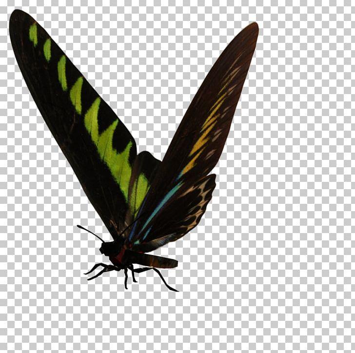 Brush-footed Butterflies Gossamer-winged Butterflies Moth Butterfly PNG, Clipart, Arthropod, Brush Footed Butterflies, Brush Footed Butterfly, Butterfly, Gossamer Winged Butterflies Free PNG Download