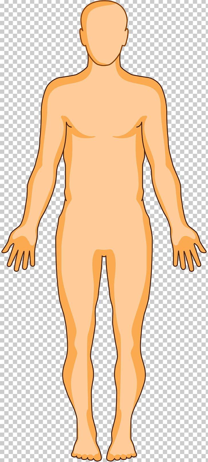 Human Body Organ Homo Sapiens Anatomy Human Skin PNG, Clipart, Abdomen, Arm, Art, Body, Brain Free PNG Download
