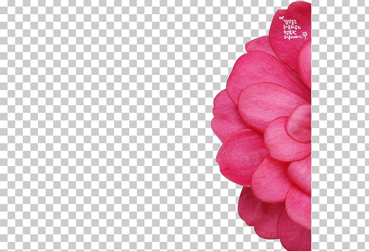 Telephone Flower Software PNG, Clipart, Computer, Dahlia, Dream, Dreams, Fantasy Free PNG Download