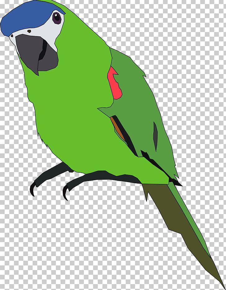 Parrot Budgerigar Open Bird PNG, Clipart, Beak, Bird, Budgerigar, Common Pet Parakeet, Computer Icons Free PNG Download