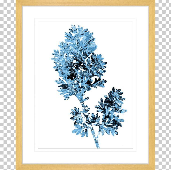 Frames Winter Font PNG, Clipart, Blue, Branch, Conifer, Flower, Nature Free PNG Download