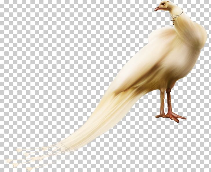 Bird PNG, Clipart, Animals, Beak, Bird, Brown, Brown Background Free PNG Download