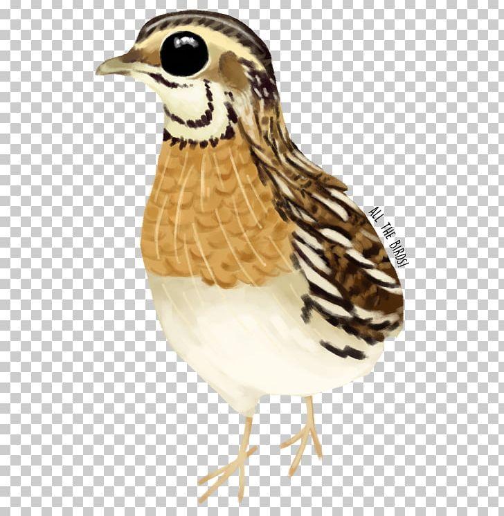 Bird Galliformes Beak Feather Animal PNG, Clipart, Animal, Animals, Beak, Bird, Blog Free PNG Download
