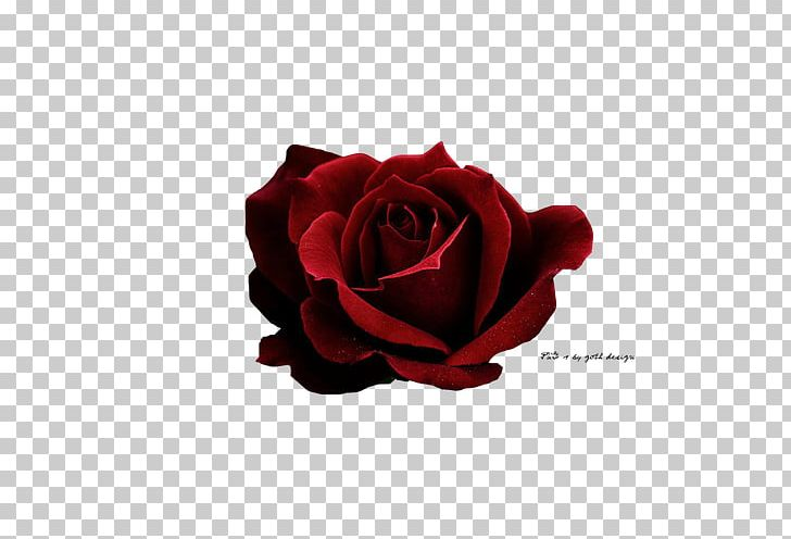 Rose Red Icon PNG, Clipart, Aesthetics, Art, Cut Flowers, Dark, Encapsulated Postscript Free PNG Download