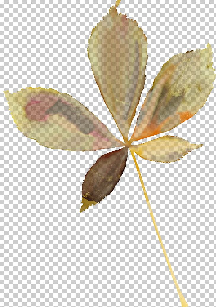 Maple Leaf Autumn Leaves Oak Plant Stem PNG, Clipart, Autumn, Autumn Leaf Color, Autumn Leaves, Branch, Chestnut Free PNG Download