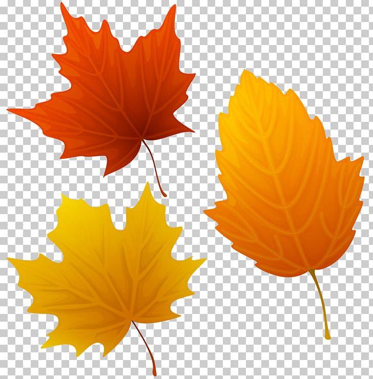 Autumn Leaf Color Art PNG, Clipart, Art, Autumn, Autumn Leaf Color, Color, Desktop Wallpaper Free PNG Download