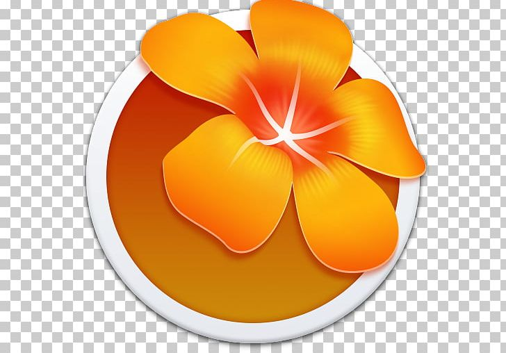 Orange Petal Flower Yellow PNG, Clipart, Adobe After Effects
