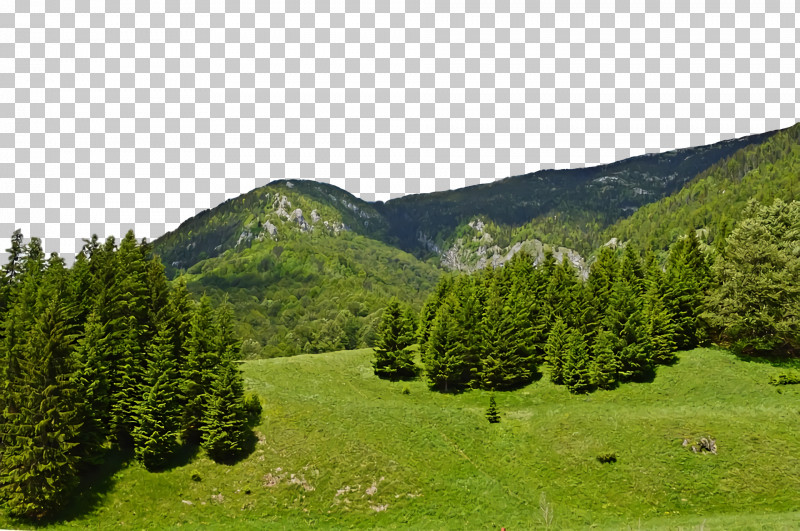 Conifers Tropical And Subtropical Coniferous Forests Mount Scenery Vegetation Temperate Coniferous Forest PNG, Clipart, Broadleaved Tree, Coniferous Forest, Conifers, Fir, Forest Free PNG Download