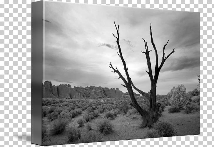 Landscape Photography Bryce Canyon National Park Landscape Photography PNG, Clipart, Art, Branch, Bryce Canyon National Park, Landscape, Landscape Painting Free PNG Download