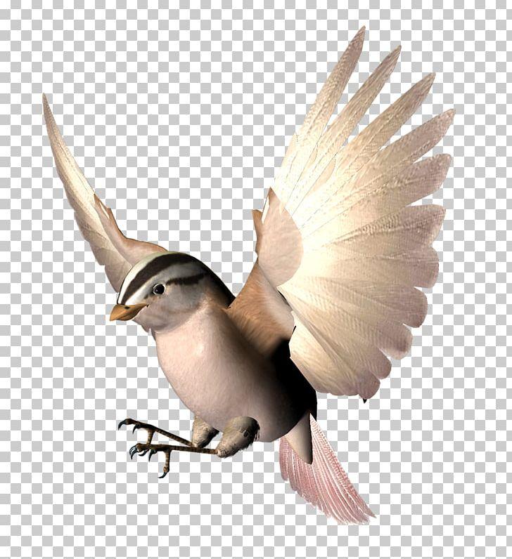 Bird Wing Beak Animation PNG, Clipart, 3d Computer Graphics