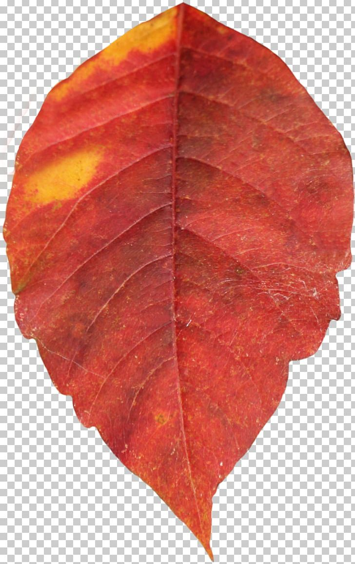 Autumn Leaf Color PNG, Clipart, Autumn, Autumn Leaf Color, Autumn Leaves, Desktop Wallpaper, Display Resolution Free PNG Download