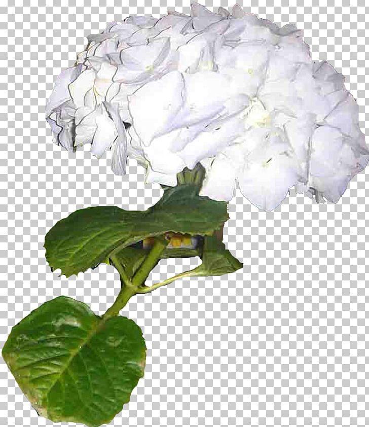 Hydrangea LiveInternet Statistics Cut Flowers Plant PNG, Clipart, Cornales, Cut Flowers, Diary, Flower, Flowering Plant Free PNG Download