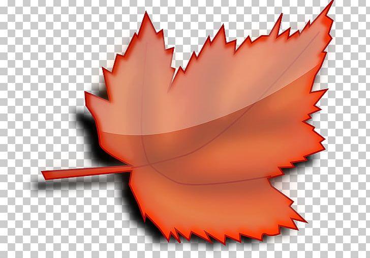 Autumn Leaf Color Tree PNG, Clipart, Autumn, Autumn Leaf Color, Closeup, Flower, Leaf Free PNG Download