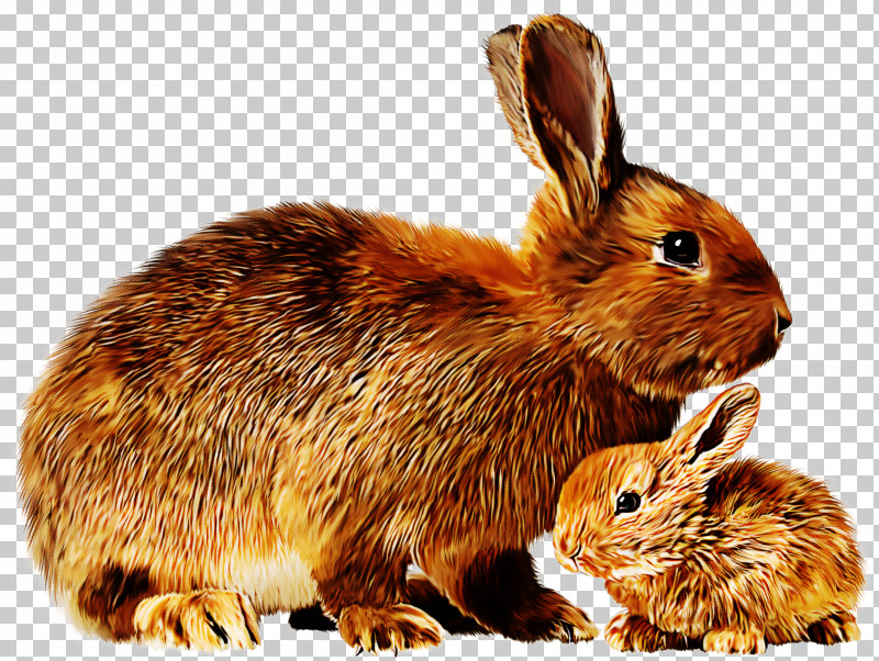 Rabbit Mountain Cottontail Rabbits And Hares Hare Lower Keys Marsh Rabbit PNG, Clipart, Brown Hare, Eastern Cottontail, Hare, Lower Keys Marsh Rabbit, Mountain Cottontail Free PNG Download