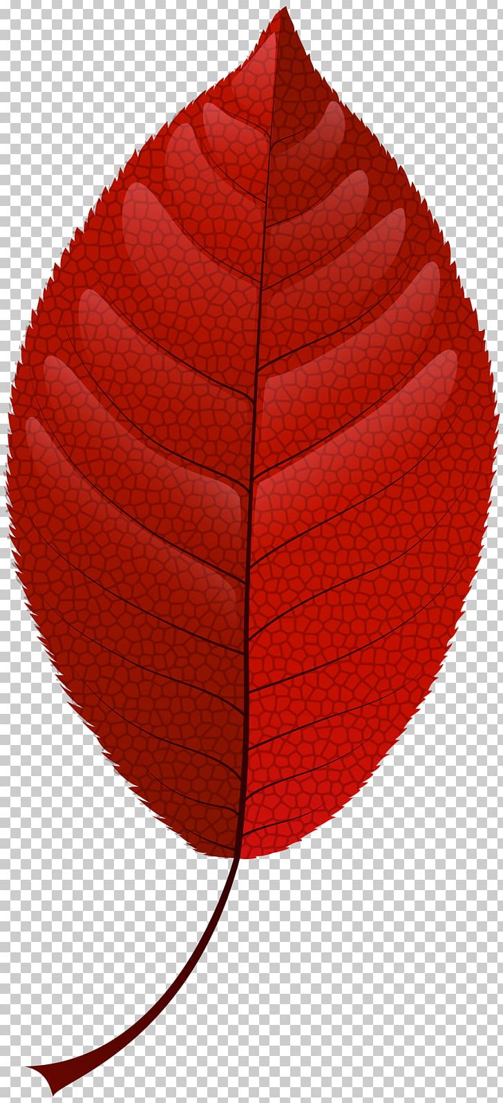 Autumn Leaf Color Red PNG, Clipart, Autumn, Autumn Leaf Color, Cap, Drawing, Green Free PNG Download